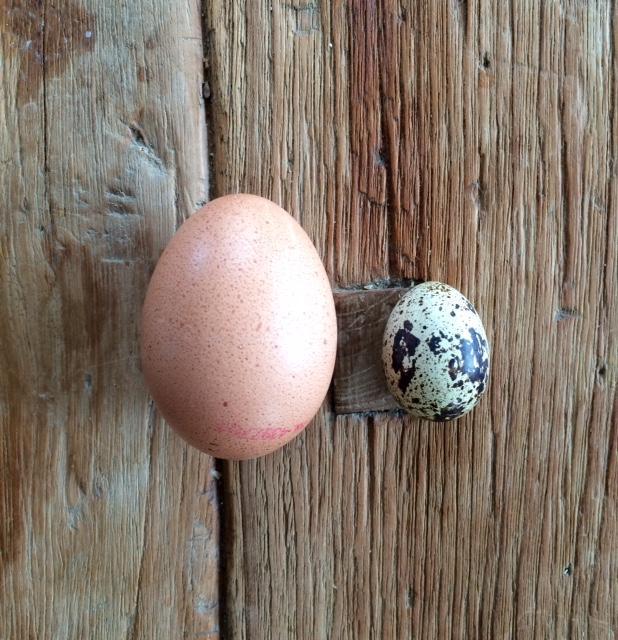 Pasen eiergerechten 2