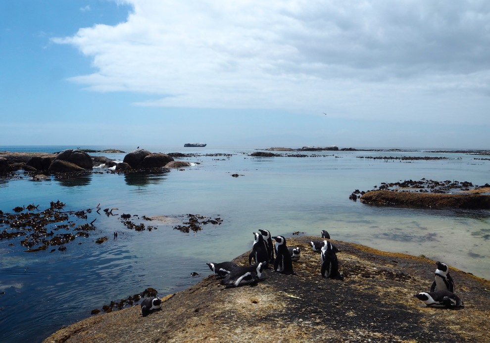 TRAVEL TRIP CAPE TOWN BOULDER BEACH PINGUINS SIMON'S TOWN FASHIONBLOGGER OOTD