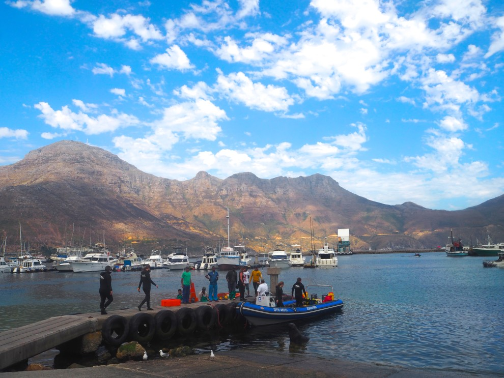 SIX SEAL SNORKELING CAPE TOWN HOTSPOTS MUST THINGS TO DO IN CAPE TOWN