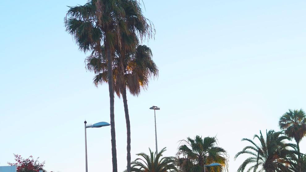 MASPALOMAS GRAN CANARIA BAUM UND PFERDGARTEN CHLOE SUNNIES