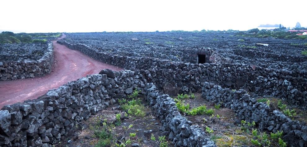 AZOREN Pico Wine Yards tui nederland Azores travel blogger