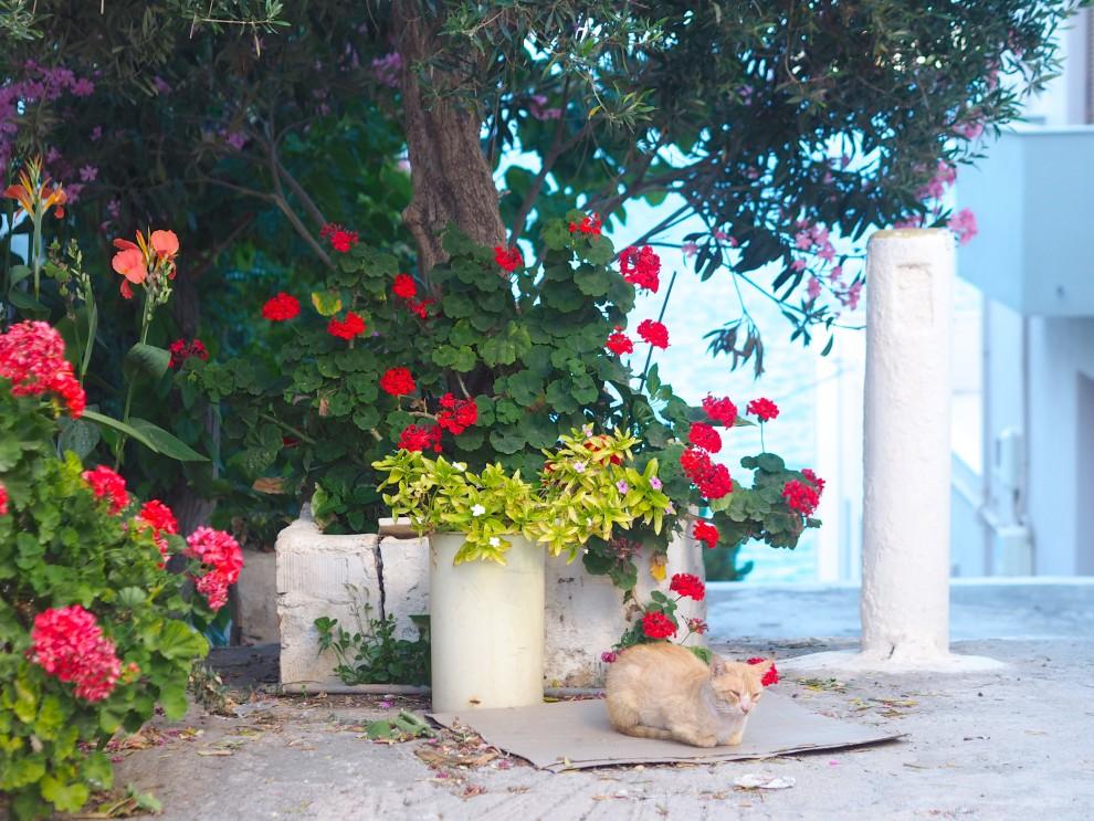 Agios Nikolaos CRETE DAIOS COVE  WANDERLUST AMSTERDAM