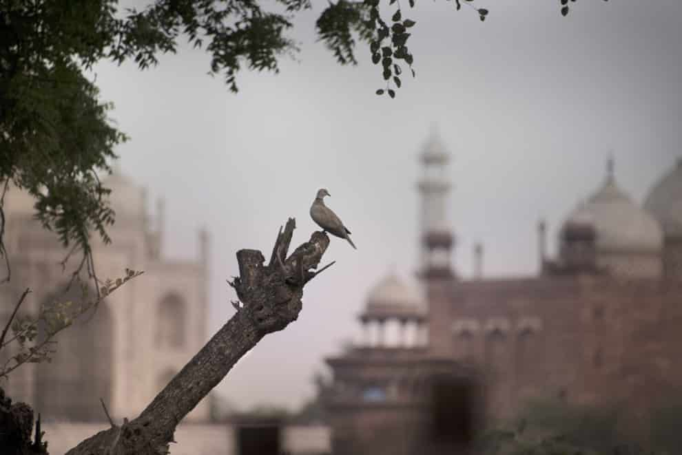 Agra Taj Magal tips India