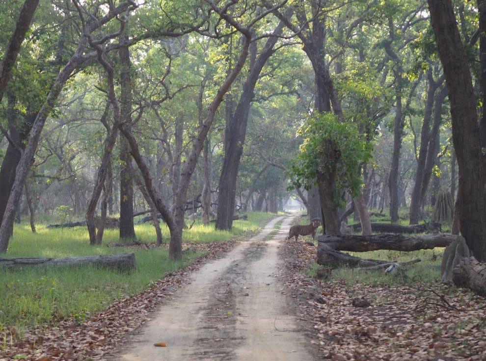 Tijger safari India Jaagir Lodge Dudhwa