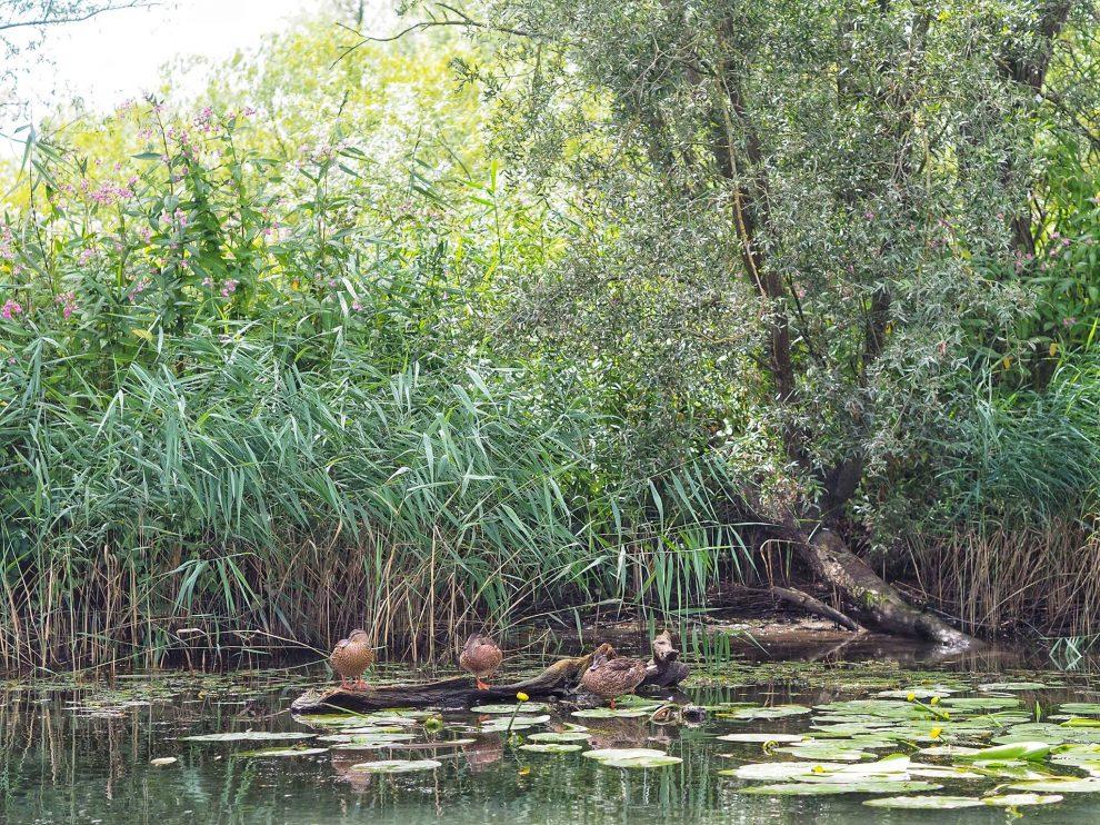 Een dag naar Natuurpark De Biesbosch in combinatie met Breda
