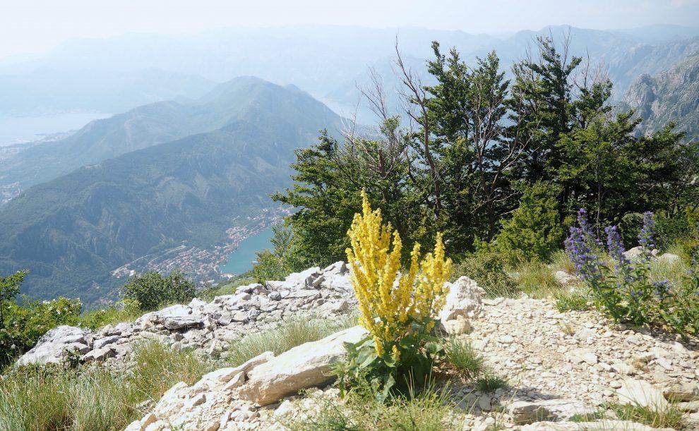 bezoek aan national Park Lovćen tijdens een roadtrip door Montenegro