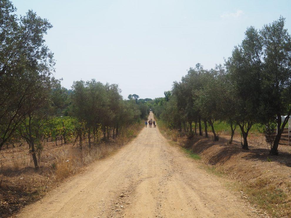 Glamping op Elba, in Italie. De weg van camping Casa Dei Prati door de wijngaarden naar het strand Lacona beach Elba