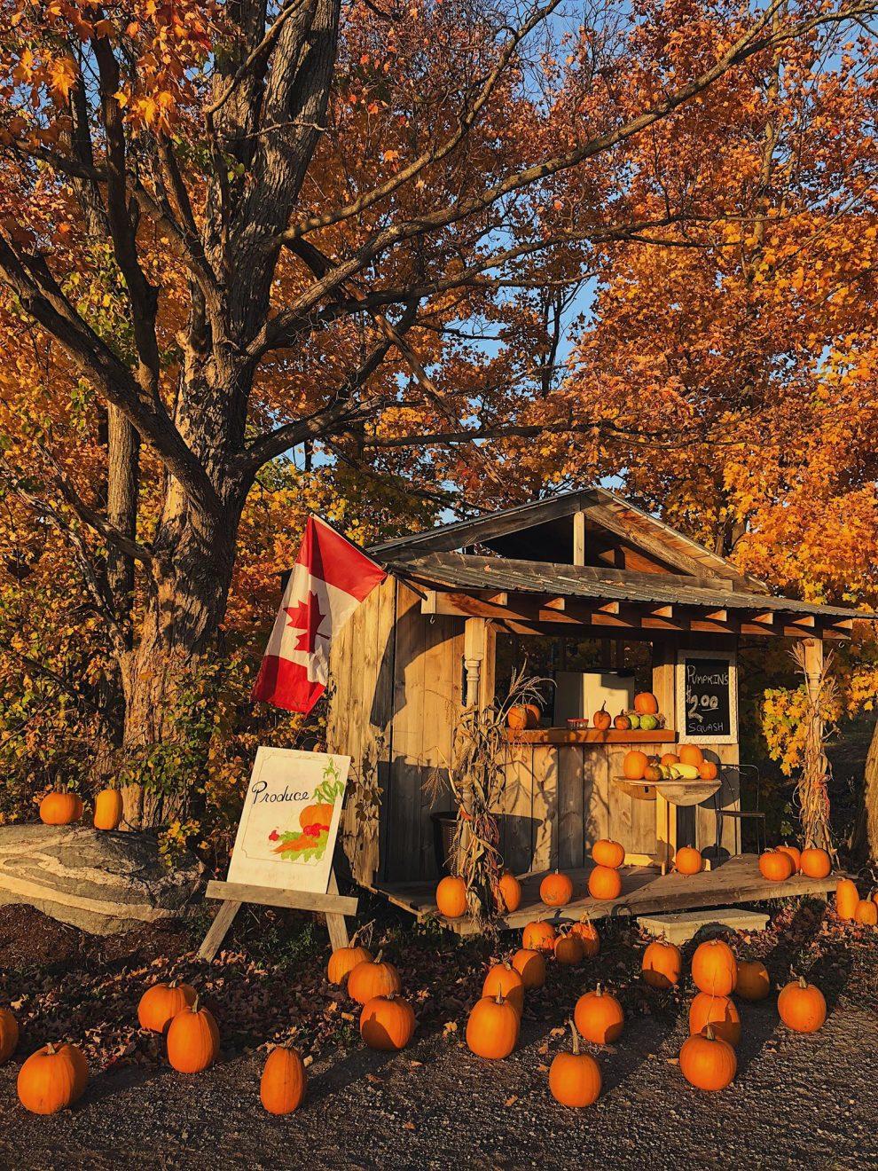 Oost Canada roadtrip. De mooiste route van Montréal naar Toronto. Rondreis Oost Canada. Algonquin Provincial Park