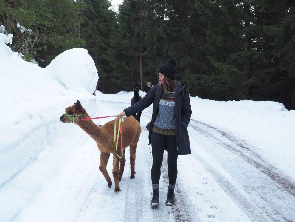 ski vakantie Oostenrijk, ski amade Salzburger Sportwelt. Ga met alpaca's wandelen door de natuur
