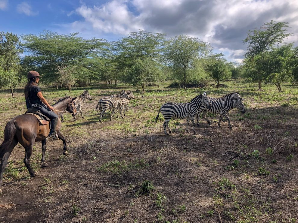 Safari rondreis door Tanzania. National Park Lake Manyara. Makasa Safari. Een safari boeken in het laagseizoen. De reisroute voor een 11daagse safari rondreis door Noord Tanzania