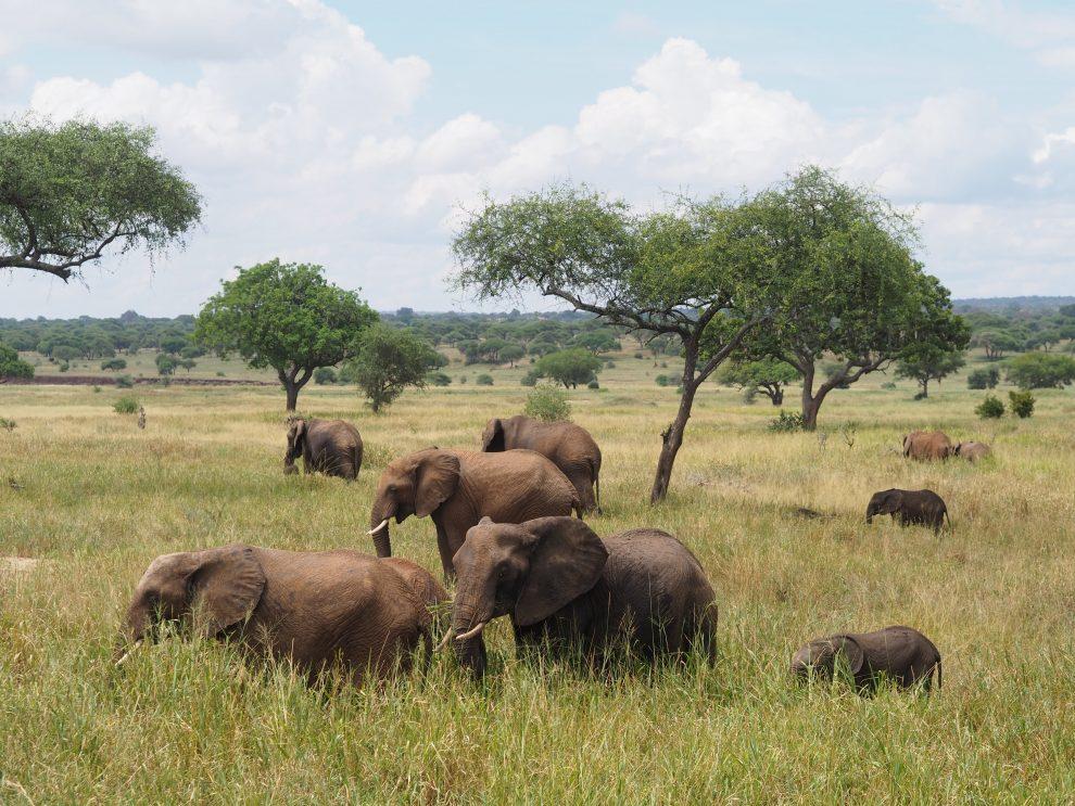Fotograferen op safari. Dit zijn de beste tips! Safari in Tarangire National Park Tanzania Makasa safaris Olympus PEN E-PL9