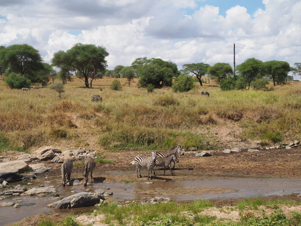 Osupoku Lodg. overnachten in Tanzania. Tarangire Nationalpark. overnachten in Tarangire Nationalpark