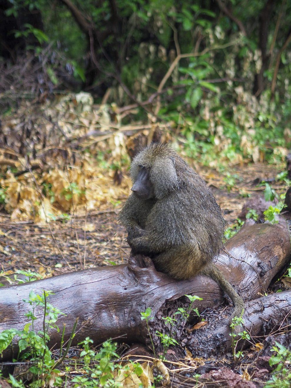 Safari rondreis door Tanzania. National Park National Park Lake Manyara. Makasa Safari. Een safari boeken in het laagseizoen.