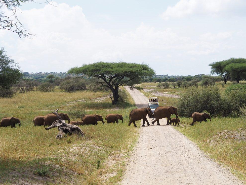 Safari rondreis door Tanzania. Olifantentrek in National Park Tarangire. Makasa Safari