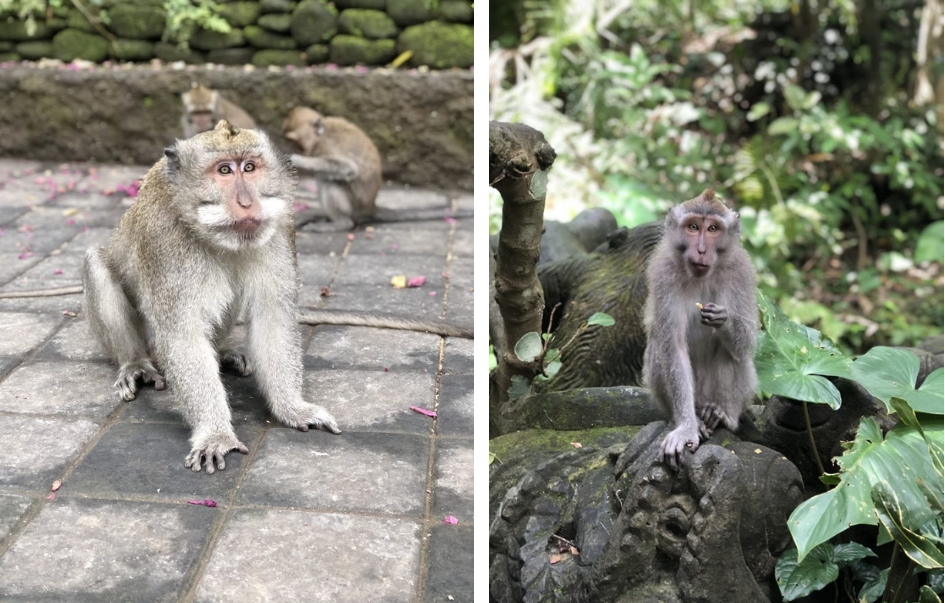 Eerste keer op vakantie naar Bali. 21-daagse reisroute & 10 tips - dingen doen in Ubud - The Sacred Monkey Forest
