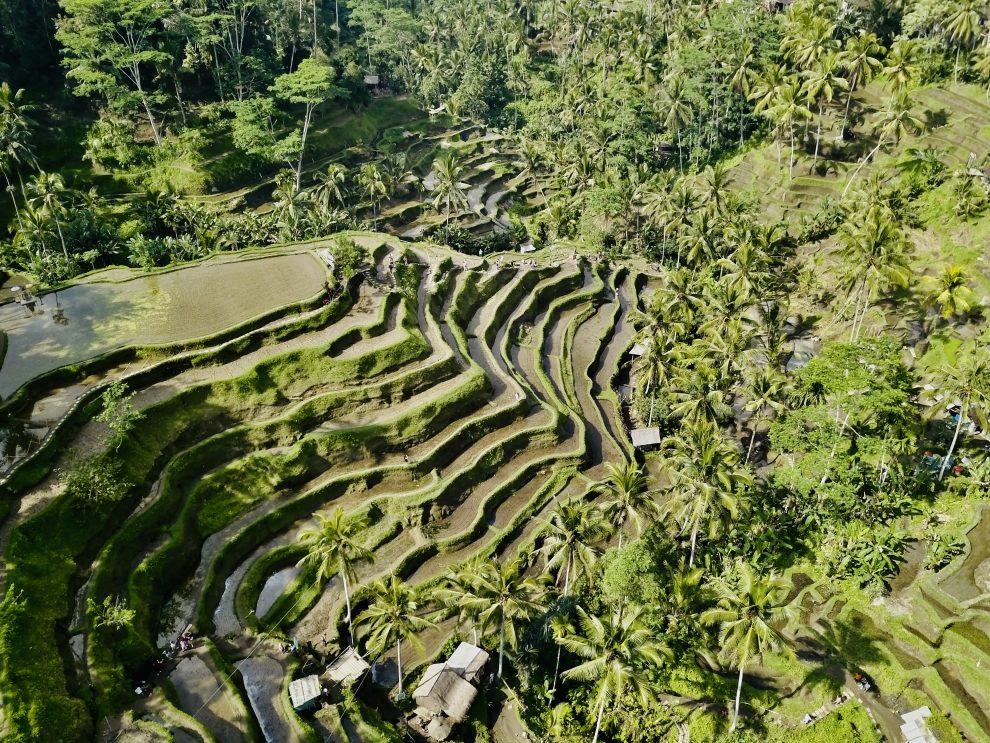 Tegallalang Rijstvelden - eerste keer op vakantie naar Bali. 21-daagse reisroute & 10 tips - foto by Lisa Schuttert