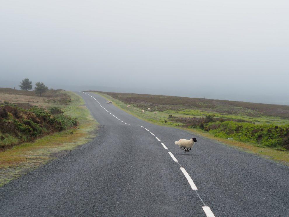 Blackey Ridge, mooiste route door North York Moors National Park Engeland - wandelroutes, lunchen, overnachten, bucketlist reizen
