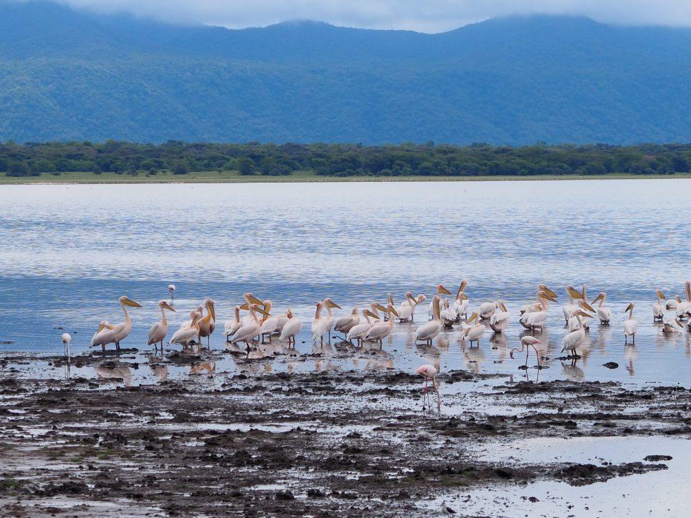 Safari rondreis door Tanzania. National Park Lake Manyara. Makasa Safari. Een safari boeken in het laagseizoen