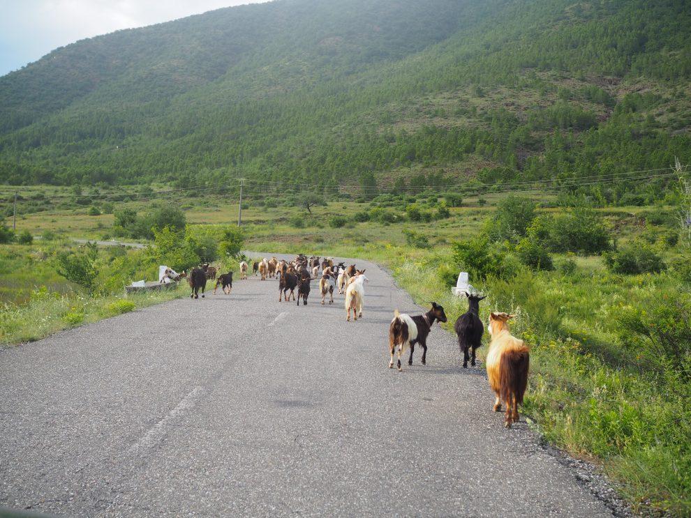 Balkan roadtrip - 3weekse reisroute - Rondreis Noord Albanië - Lake Komani
