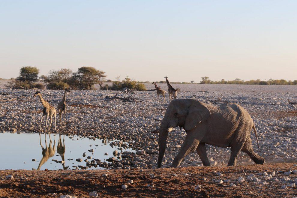Rondreis Namibie. De mooiste plekken voor 3 weken - Etosha National Park