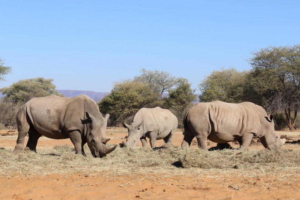 Rondreis Namibie. De mooiste plekken voor 3 weken - Waterberg Plateau National Park