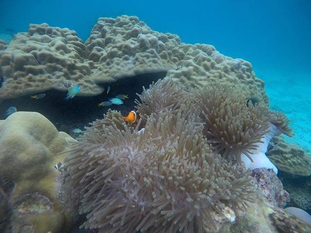 hoogtepunten van Zuid Thailand - de mooiste dingen om te doen en bezienswaardigheden voor een rondreis - duiken op Koh Tao