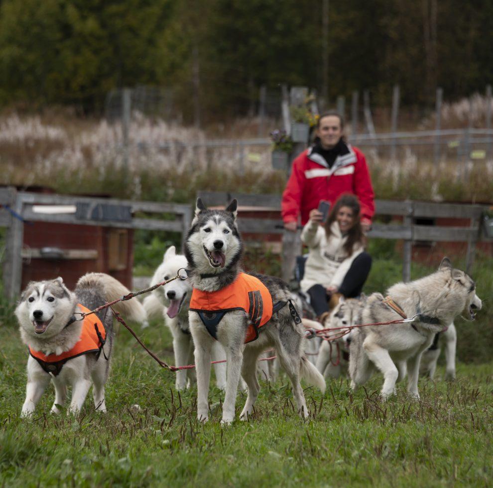 Vakantie in de wildernis van Zweden - Nordic Husky Farm, Vildmarksvägen, Wilderness Road Zweden, op vakantie in Jamtland.