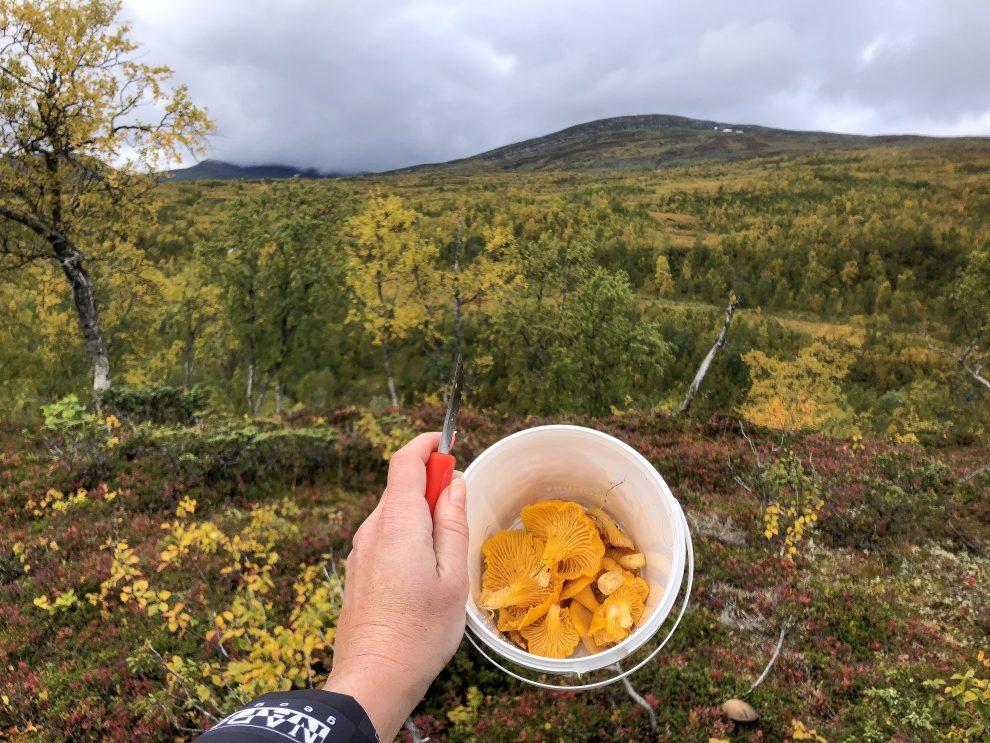 Vakantie in de wildernis van Zweden - Chanterellen plukken - lunchen in de wildernis van Zweden, Vildmarksvägen, Wilderness Road Zweden, op vakantie in Jamtland.