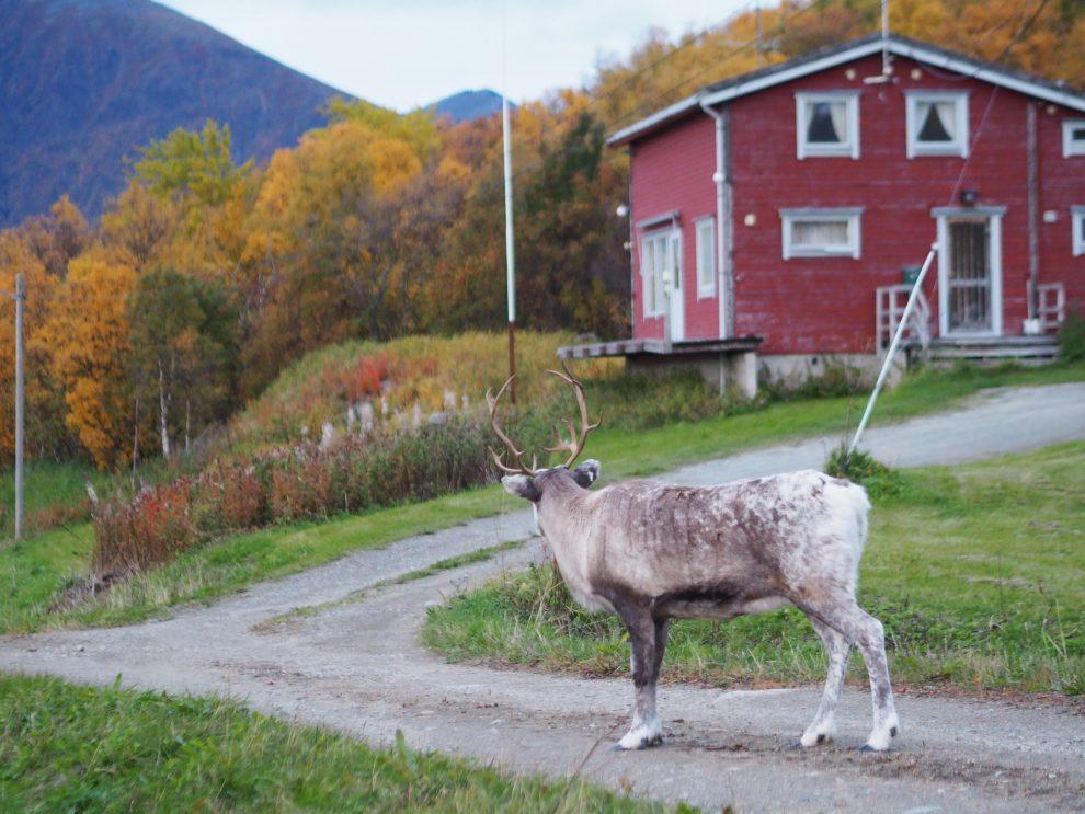Elgsnes - Harstad Noorwegen: Viking geschiedenis & RIB boat-tour langs de fjorden.