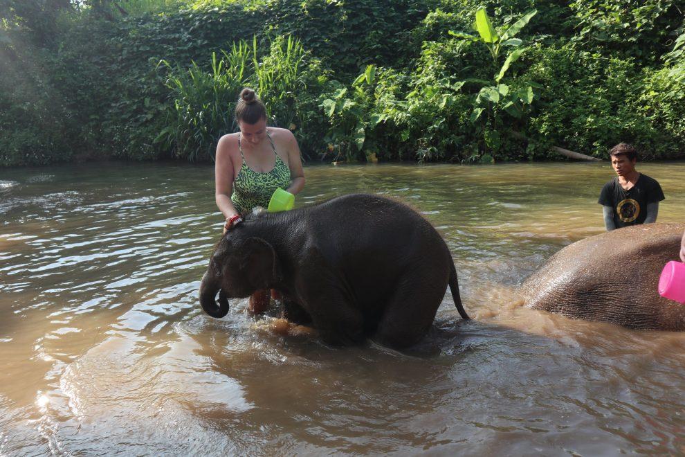 Olifantenopvang in Thailand - olifanten knuffelen en wassen ervaring/review - Bamboo Elephant Family Care