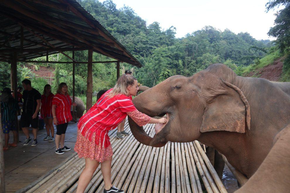 Olifantenopvang Thailand 3 - Yvette Koedam