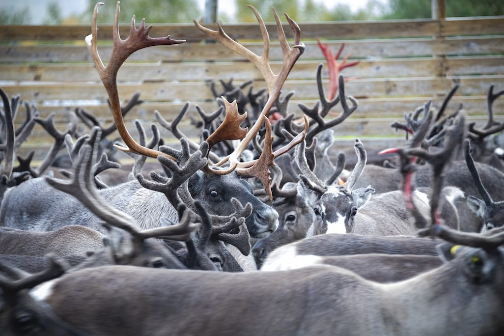 8x doen en winter tips voor Åre en Östersund in Jämtland Zweden.