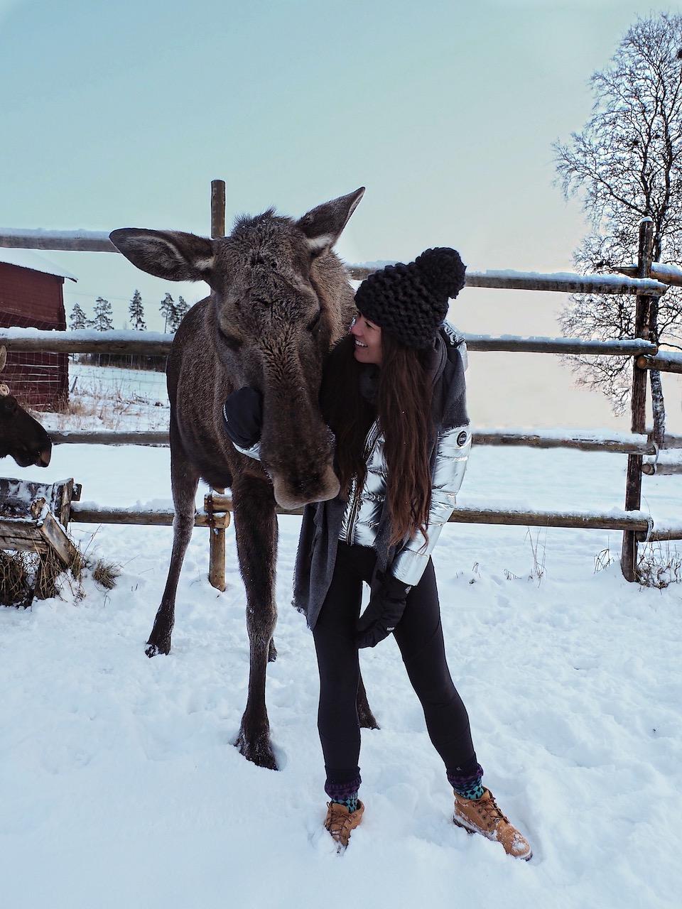 8x doen en winter tips voor Åre en Östersund in Jämtland Zweden. Moose Garden