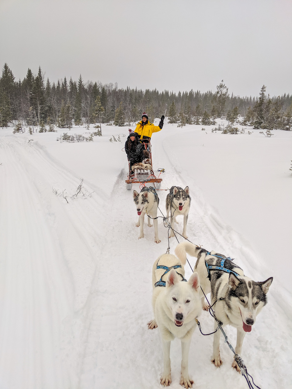 dogsledding Zweden, 8x doen en winter tips voor Åre en Östersund in Jämtland Zweden.