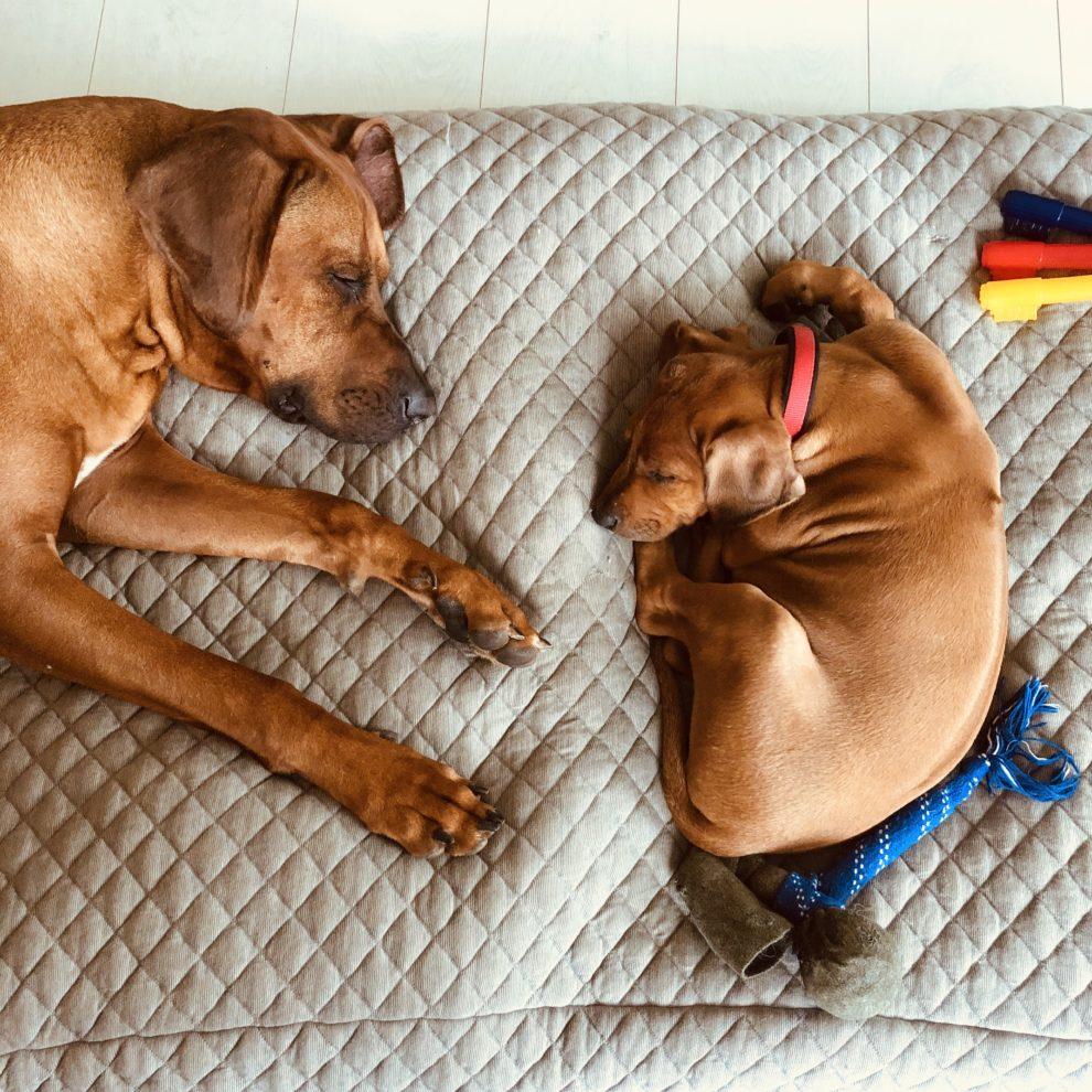 Emigreren naar Spanje -  de twee honden