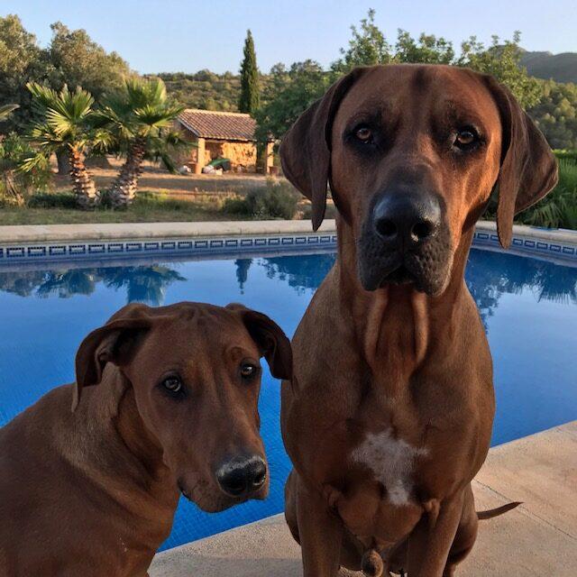 Honden Manu met zijn broertje Juma bij Casa Alba