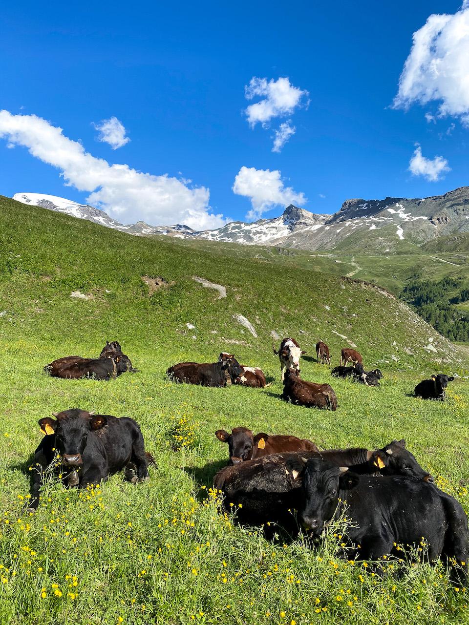 Zomerski in Italie Breuil-Cervinia, matterhorn