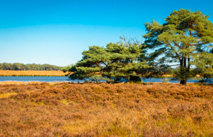 Mooiste park van Drenthe: Nationaal Park Dwingelderveld