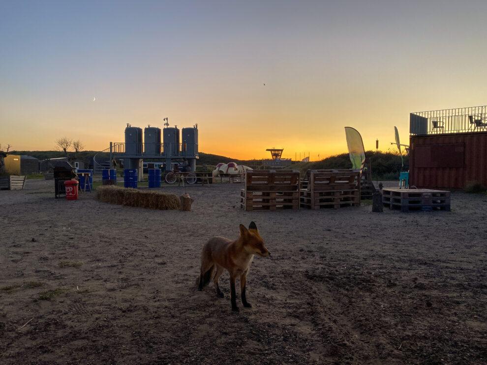 Basecamp IJmuiden, digital nomad vakantie in Nederland