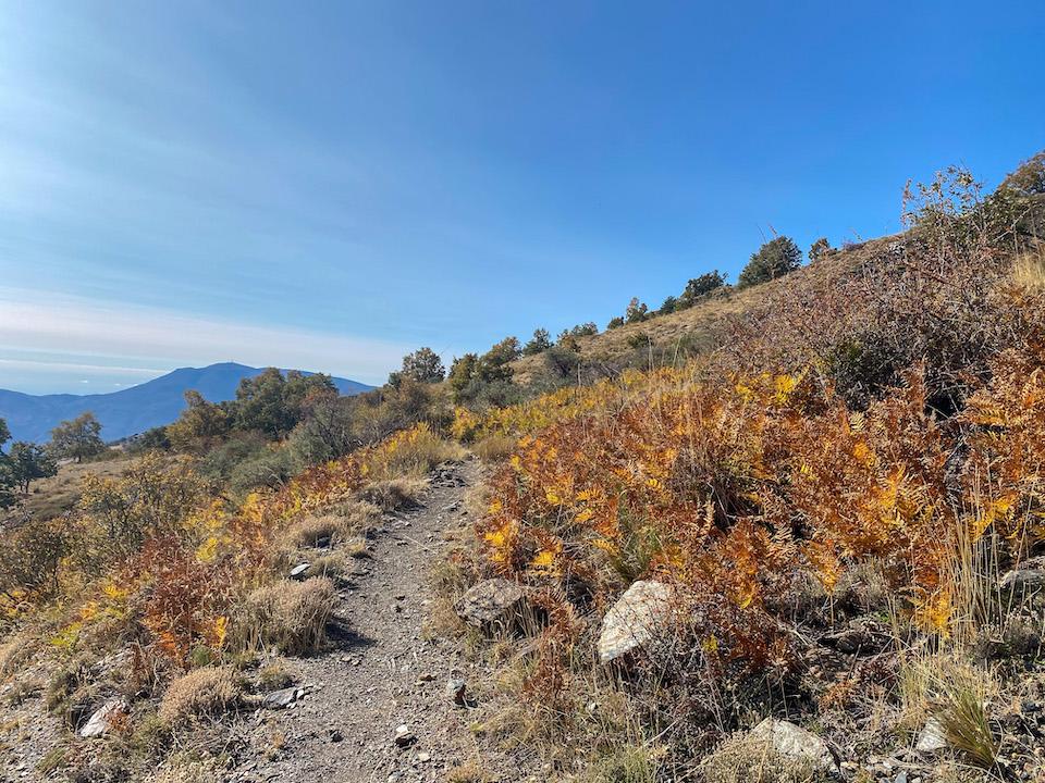 Lanjarón valley - huttentocht met Nevadensis