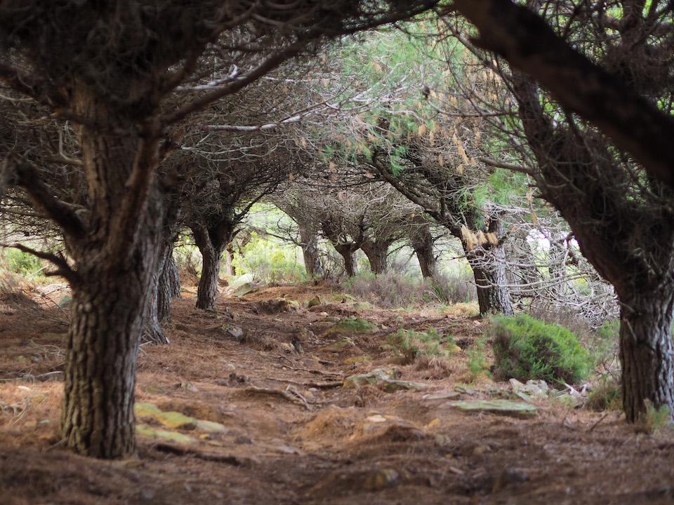 hiken en wandelen in Tarifa - Ruta del Budha