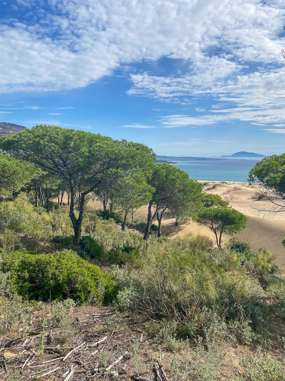 Punta Paloma
