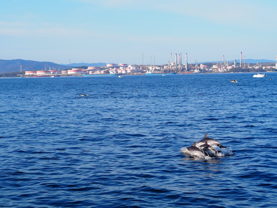 Dolfijnen en Walvissen spotten in Andalusie