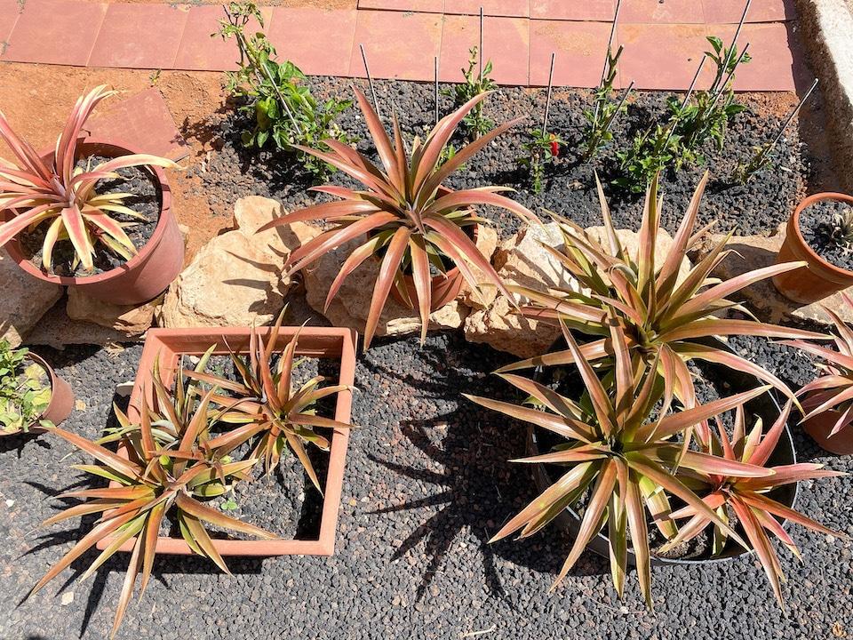 Moestuin van Villa Vital -  wandelvakantie op Fuerteventura