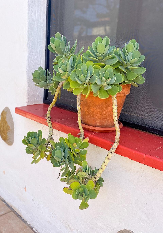 Authentieke accommodatie op Fuerteventura