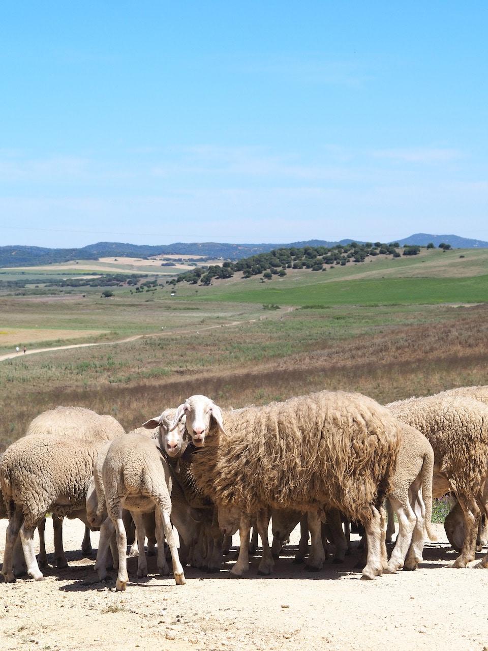 Andalusie vakantie omgeving Vejer de la Frontera