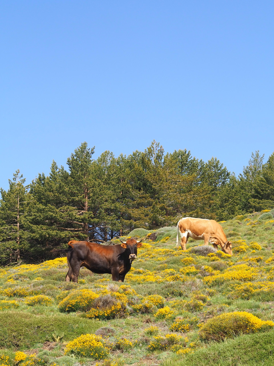 Sierra Nevada - Alpujarras