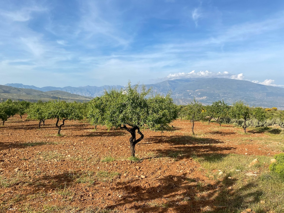 Paardrijden in Andalusie / Albuñuelas