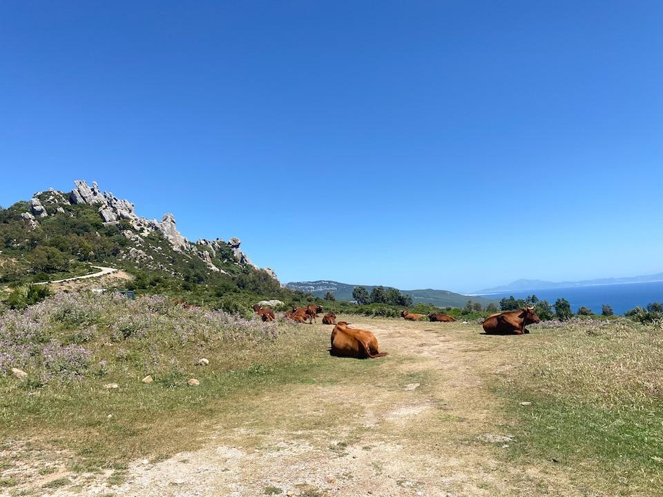 tarifa bezoeken tijdens rondreis door Andalusië