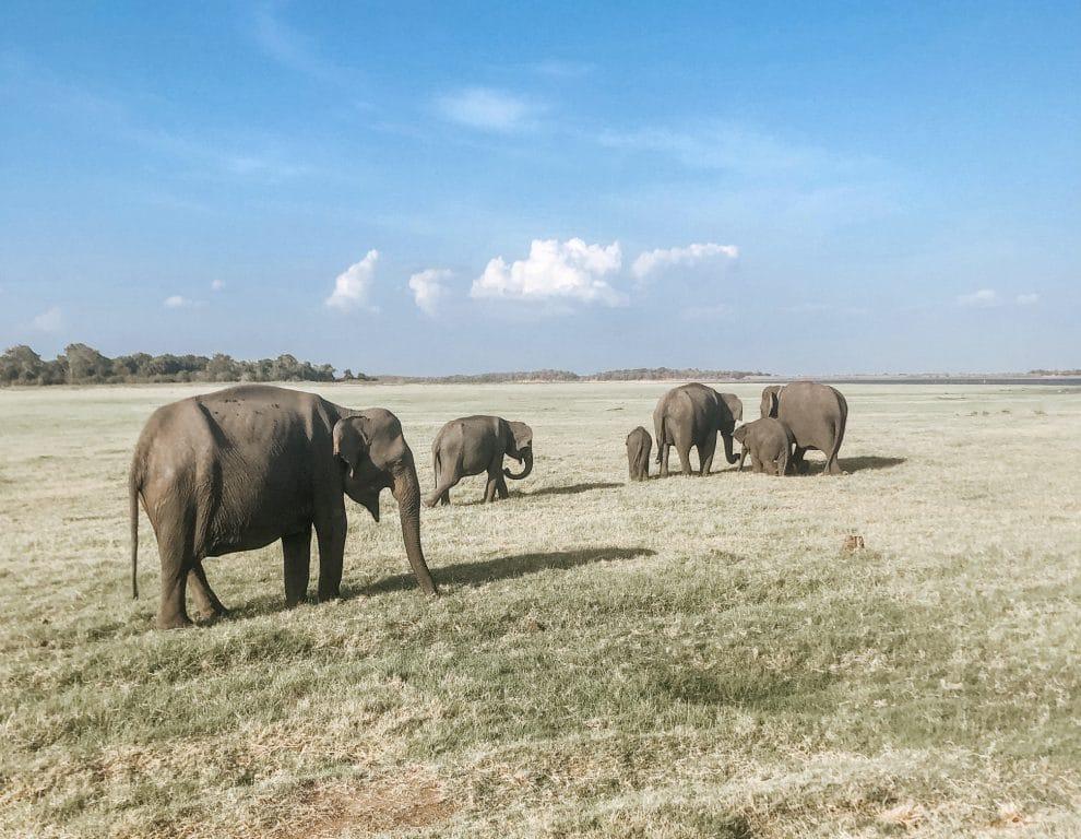 hoogtepunten bezienswaardigheden rondreis Sri Lanka